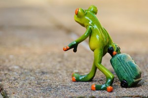 frog-897419_640